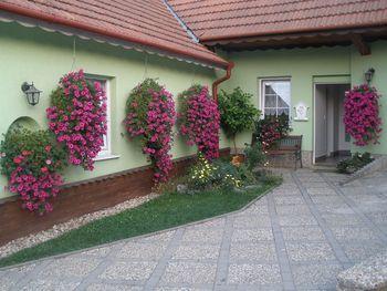 Ubytování Jedovnice Penzion - Privat