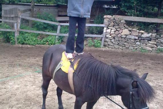 Vlastní koňské stáje a jezdecké kurzy