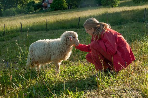 děti si mohou pohrát s ovečkami