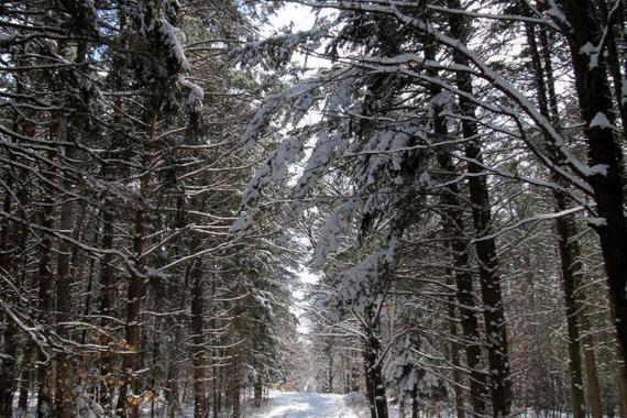Zimní cesta na zámek Vlčí kopec je krásný zimní záběr., máme tady málo sněhu. Někdy je to zajímavé,