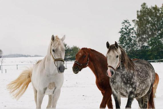 Koně Na Stodolci