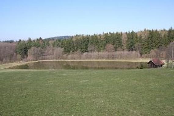 K areálu patří rybník