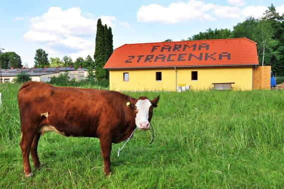 Farma Ztracenka foto 11