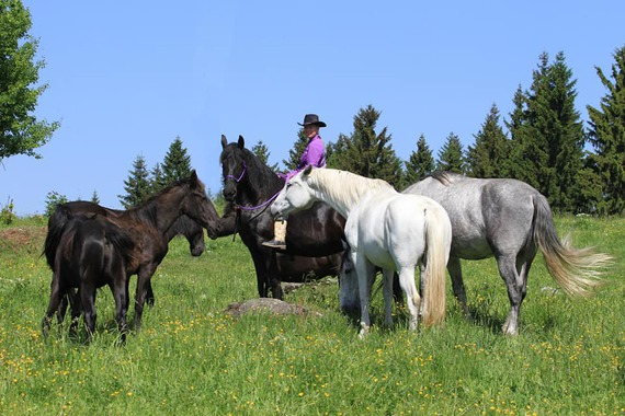 Jízdy na koních